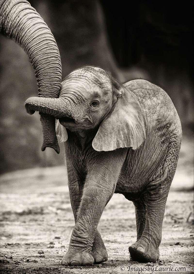 في صور: الأبوة والأمومة في مملكة الحيوان كما لم ترها من قبل Animal19