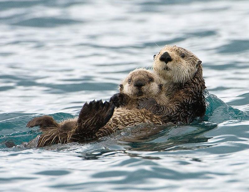في صور: الأبوة والأمومة في مملكة الحيوان كما لم ترها من قبل Animal20