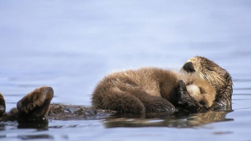في صور: الأبوة والأمومة في مملكة الحيوان كما لم ترها من قبل Animal21