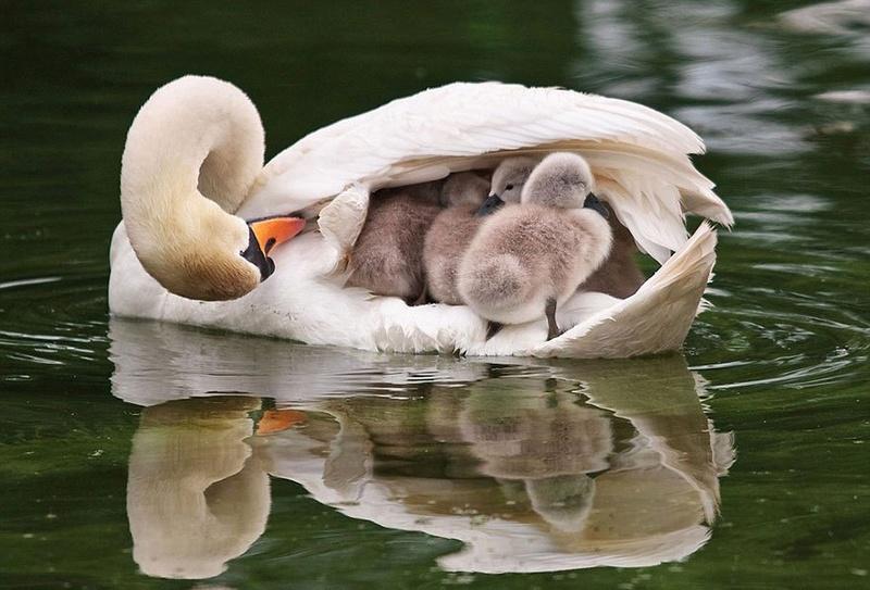 في صور: الأبوة والأمومة في مملكة الحيوان كما لم ترها من قبل Animal23