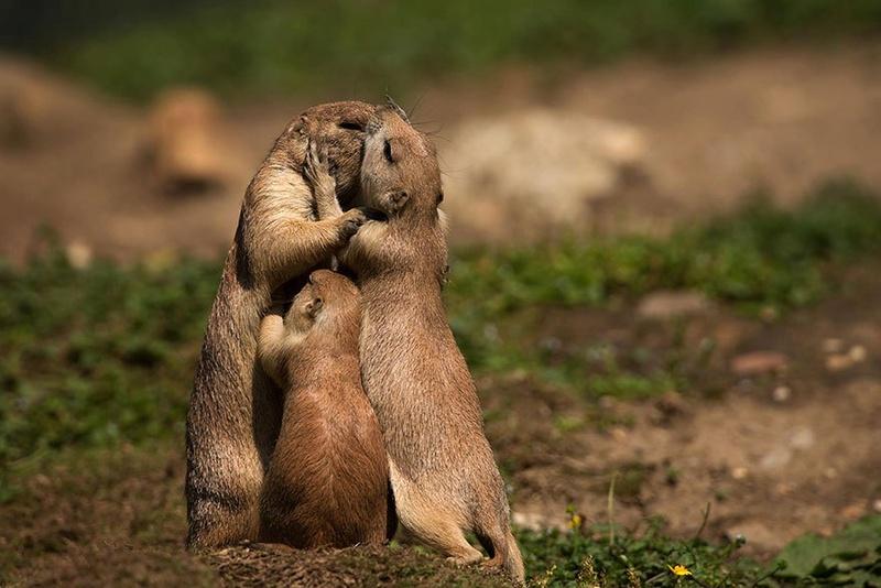 في صور: الأبوة والأمومة في مملكة الحيوان كما لم ترها من قبل Animal24
