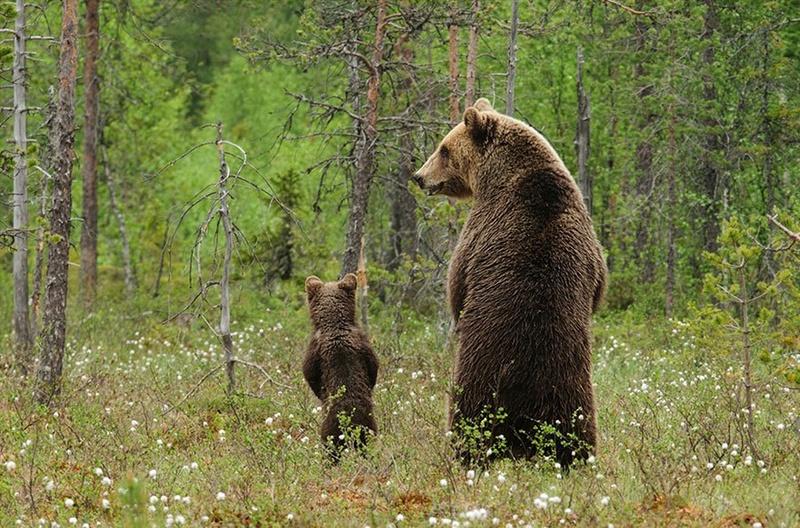 في صور: الأبوة والأمومة في مملكة الحيوان كما لم ترها من قبل Animal28