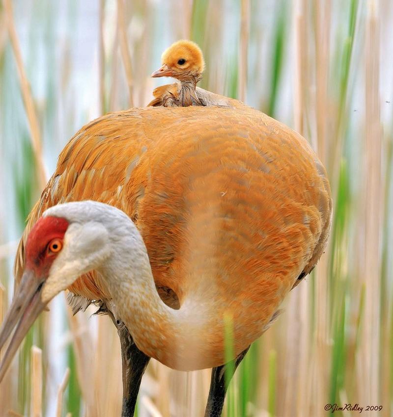 في صور: الأبوة والأمومة في مملكة الحيوان كما لم ترها من قبل Animal29