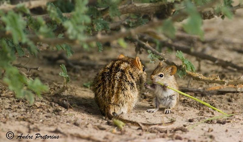 في صور: الأبوة والأمومة في مملكة الحيوان كما لم ترها من قبل Animal30