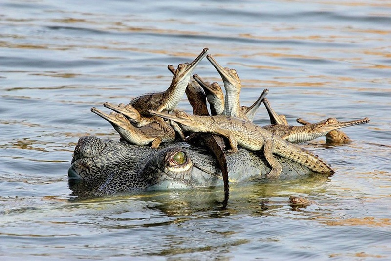 في صور: الأبوة والأمومة في مملكة الحيوان كما لم ترها من قبل Animal31