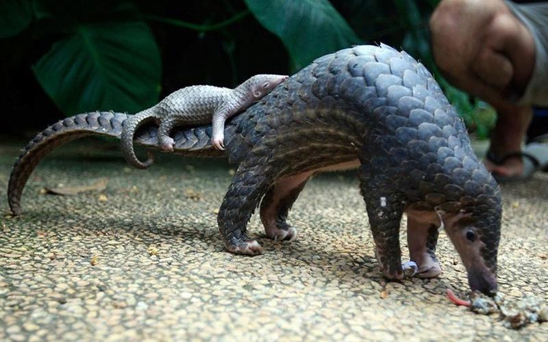 في صور: الأبوة والأمومة في مملكة الحيوان كما لم ترها من قبل Animal32