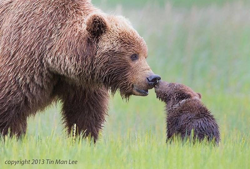 في صور: الأبوة والأمومة في مملكة الحيوان كما لم ترها من قبل Animal33