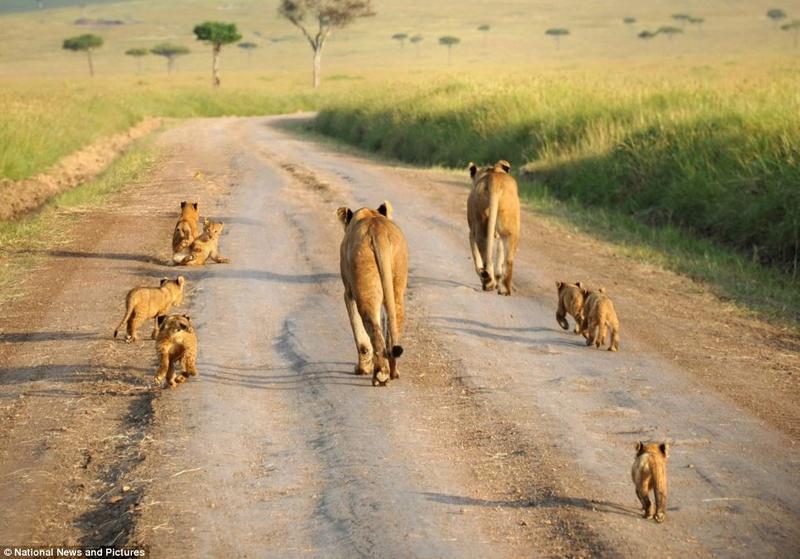 في صور: الأبوة والأمومة في مملكة الحيوان كما لم ترها من قبل Articl10