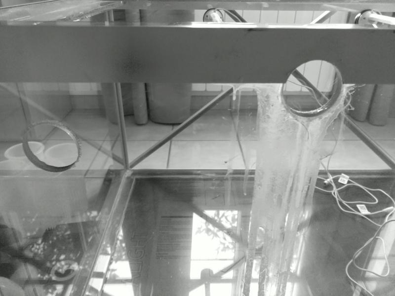 2600 litres récifal mixte , avant qu'il ne soit trop tard . - Page 5 Img_2304
