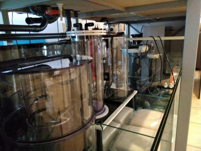 2600 litres récifal mixte , avant qu'il ne soit trop tard . - Page 8 Img_2441