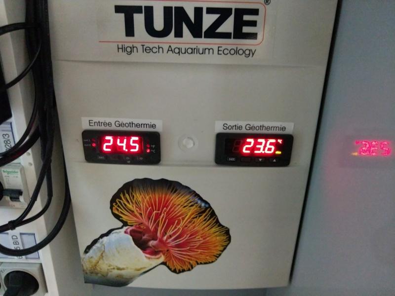 2600 litres récifal mixte , avant qu'il ne soit trop tard . - Page 13 Img_2655