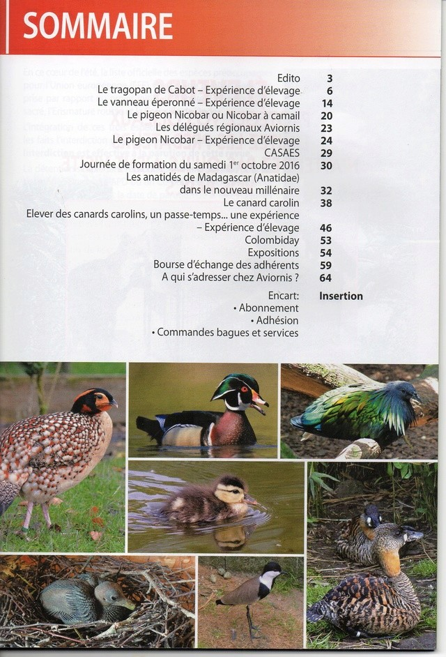 AVIORNIS FRANCE. - Page 5 Img48310