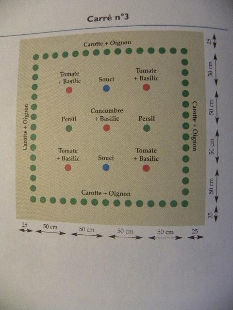Cultures associées et alternance jardin en carré Dscn9013