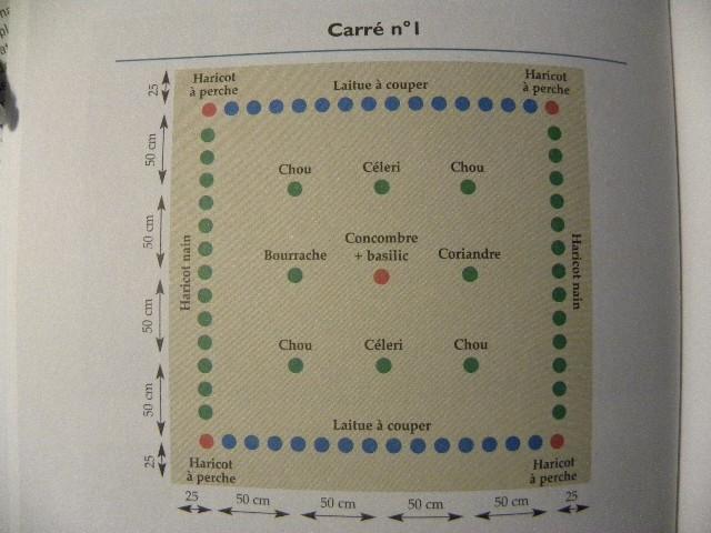 Cultures associées et alternance jardin en carré Dscn9017