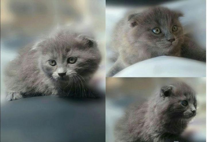 للبيع قطط ذكر وانثى بالشارقية  188
