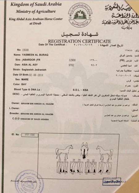 مهره عربية واهو خط فرنسي  بأوراق  204