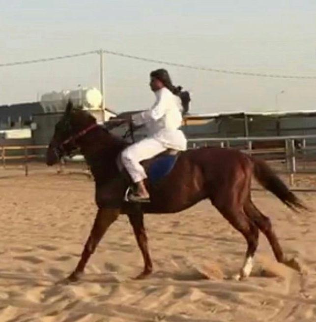 حصان انتاج شعبي عمره 5 سنوات تقريبا E62