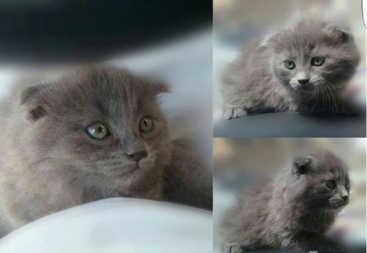 للبيع قطط ذكر وانثى بالشارقية  E87