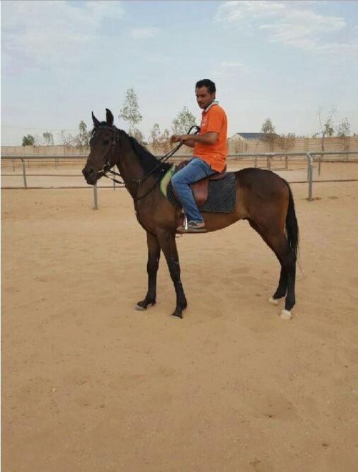 حصان شعبي احمر اللون Hj13
