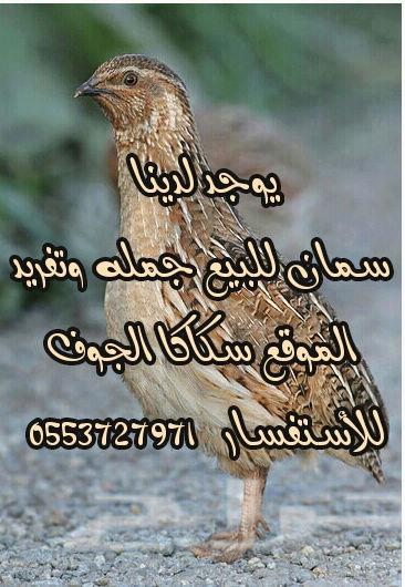 سمان جمله وتغريد مشروطة الصحة والسلامة  I62