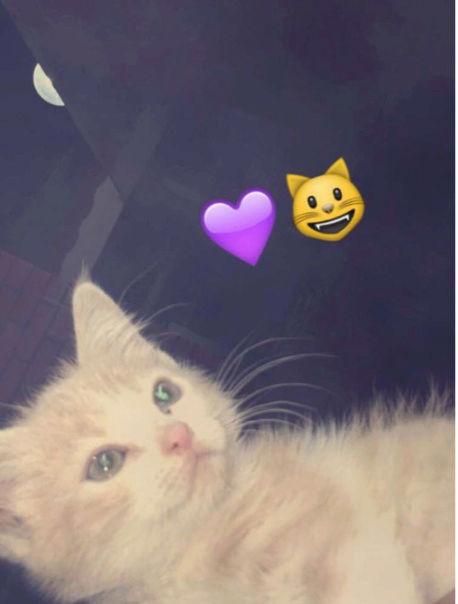 قطه شيرازيه صغيرة ولعوبة  O28