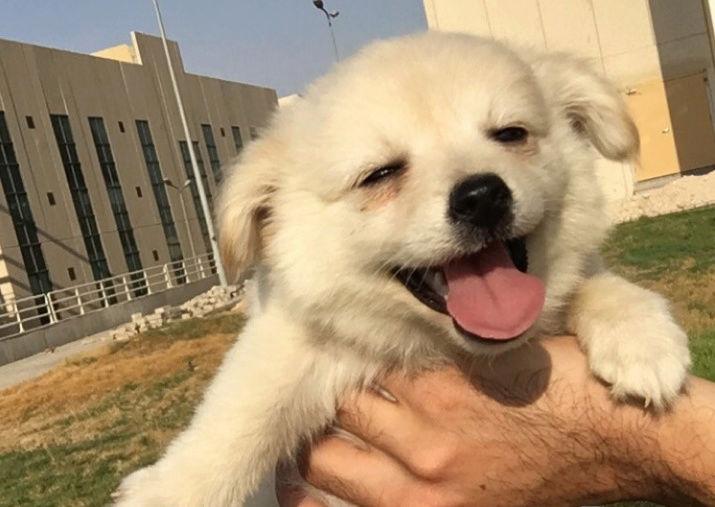كلب صغير جمييل مع الأغراض  Rtt10
