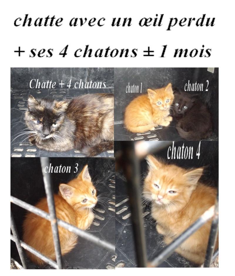 Chatte écaille tortue borgne et ses 4 chatons 2 mois - Fourrière Sud 44 - Délai 30 juin 2016 8f11