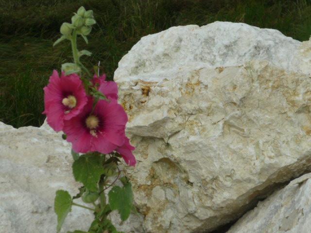Petites fleurs et fruits ... - Page 2 P1040127