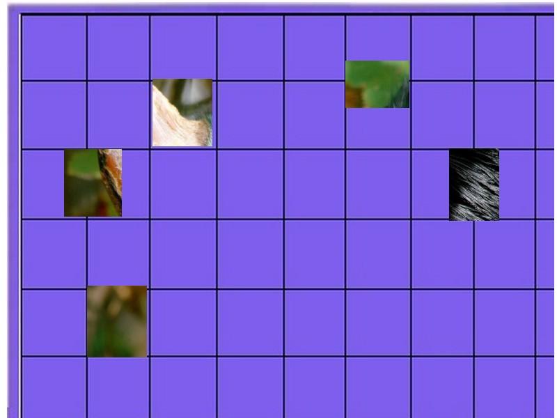un oiseau -ajonc - 16 juillet  trouvé par René le lillois  Un_ois10