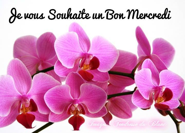 Bonjour du jour et bonsoir du soir - Page 5 Mercre11