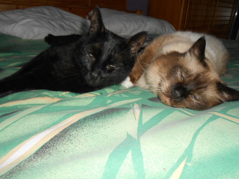 urgent : besoin d'une FA/d'adoptants sans chat mâle... Dscn8715