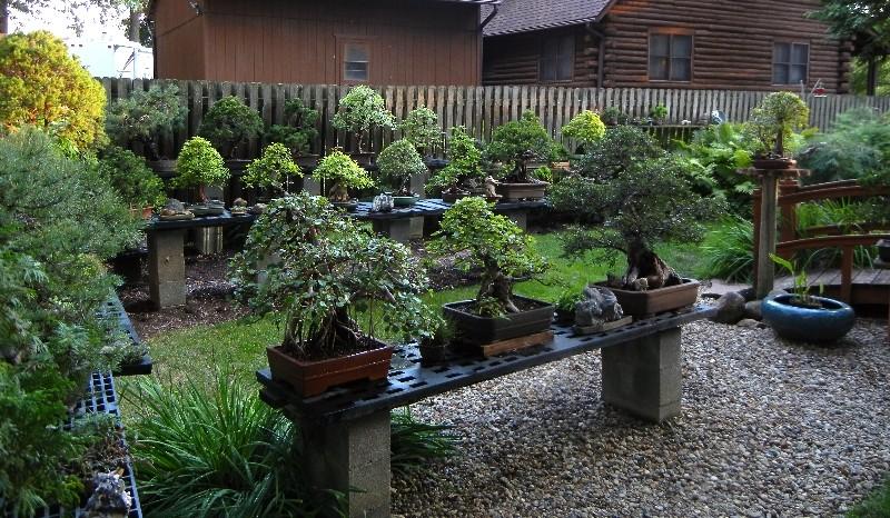 Dale Cochoy @ Wild Things Bonsai Studio selling off bonsai collection Collec10