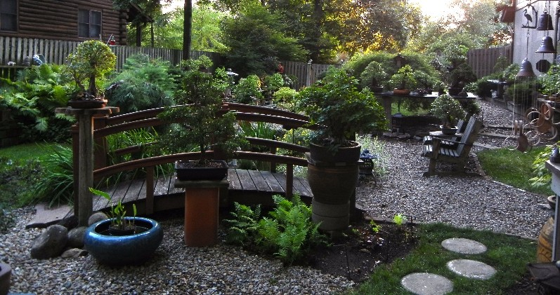 Dale Cochoy @ Wild Things Bonsai Studio selling off bonsai collection Collec11