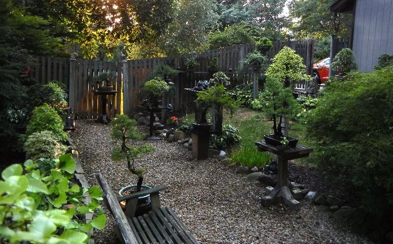 Dale Cochoy @ Wild Things Bonsai Studio selling off bonsai collection Collec12