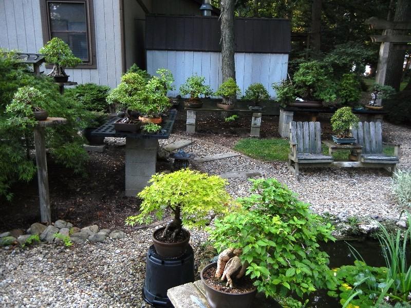 Dale Cochoy @ Wild Things Bonsai Studio selling off bonsai collection Collec13