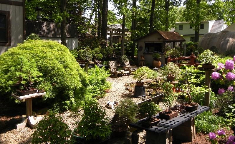 Dale Cochoy @ Wild Things Bonsai Studio selling off bonsai collection Collec14