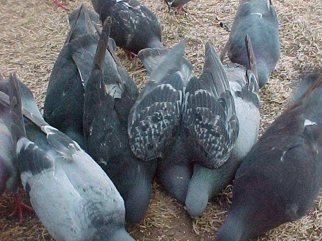 Feeding the Ferals 2010-015