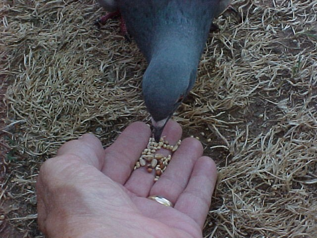 Feeding the Ferals 2010-019