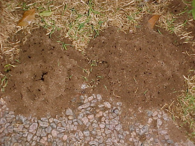 Massive Ant Mounds 2010-043