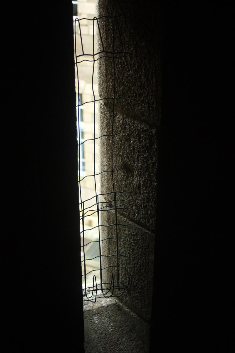 Retour des grands murins de Sainte-Anne d'Auray _mg_6611