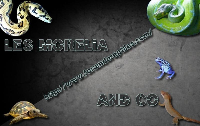 Les Morélia