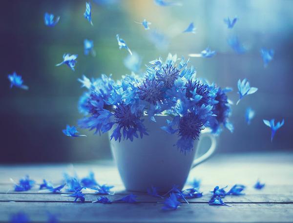 Bộ ảnh vũ điệu loài hoa F1-14510
