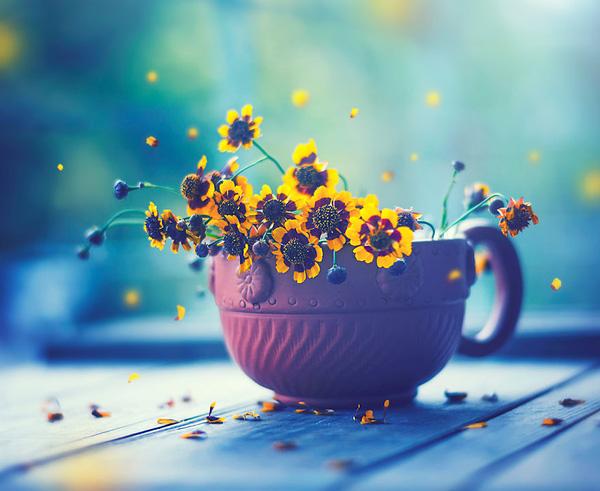 Bộ ảnh vũ điệu loài hoa F11-1410