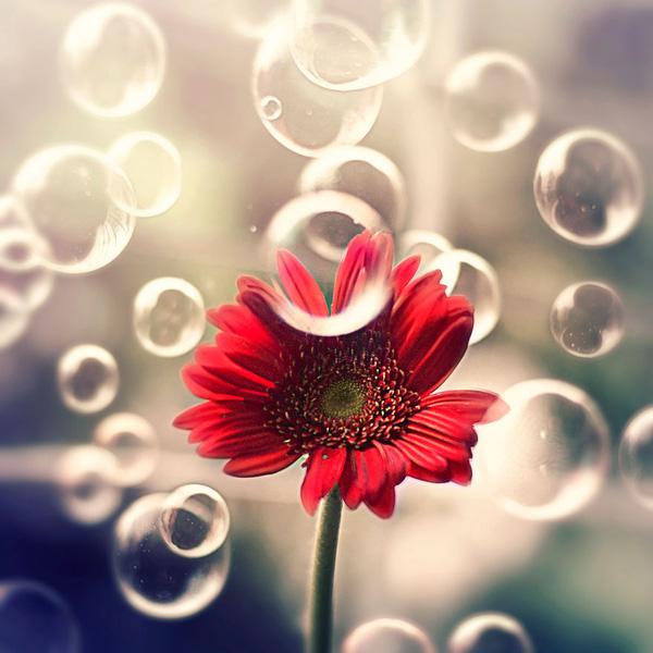 Bộ ảnh vũ điệu loài hoa F12-1410