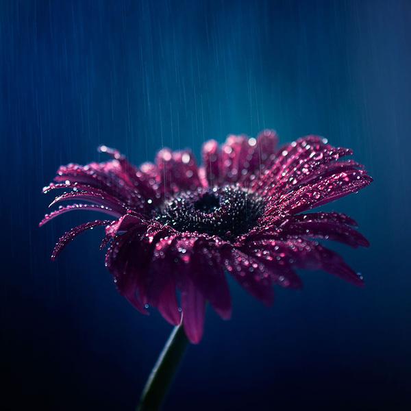 Bộ ảnh vũ điệu loài hoa F13-1410