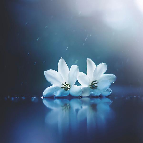 Bộ ảnh vũ điệu loài hoa F14-1410