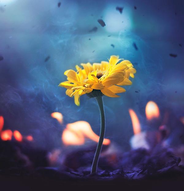 Bộ ảnh vũ điệu loài hoa F15-1410