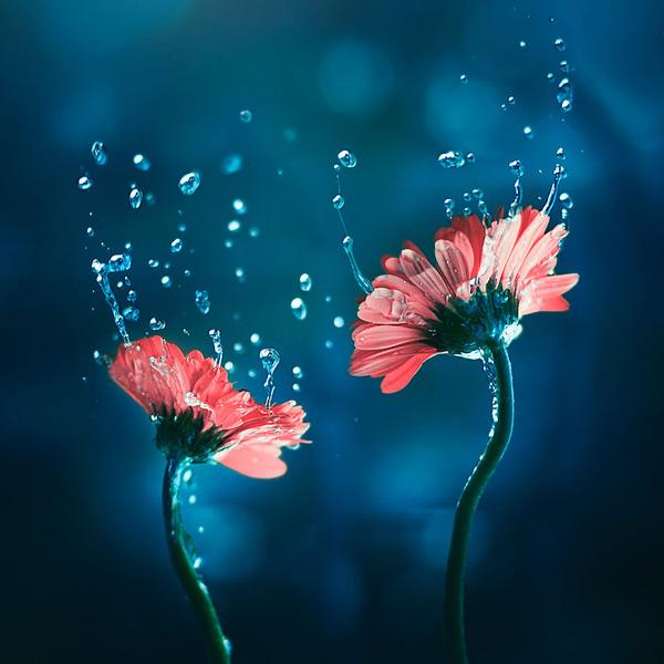 Bộ ảnh vũ điệu loài hoa F2-14510