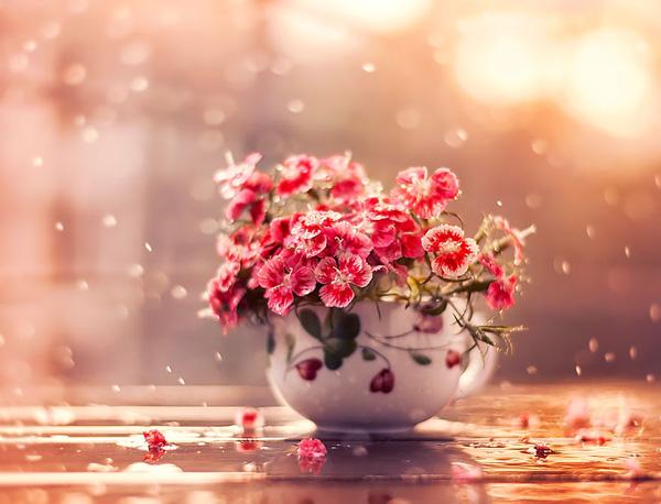 Bộ ảnh vũ điệu loài hoa F3-14510