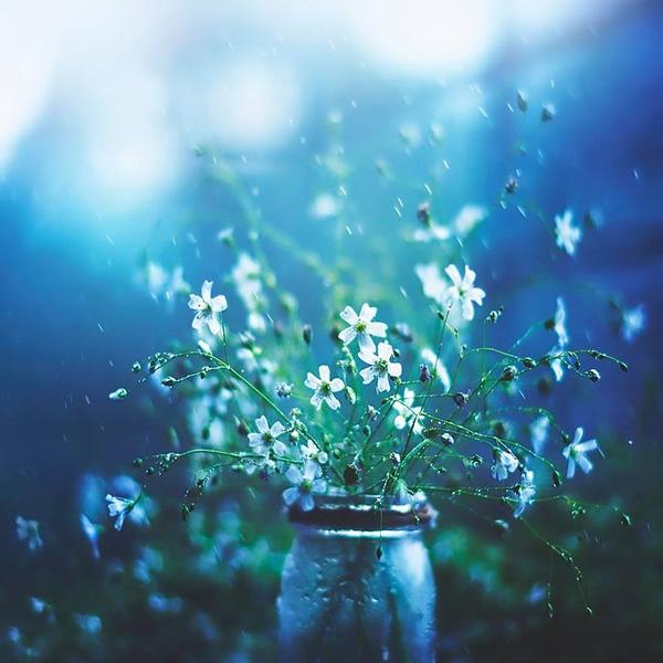 Bộ ảnh vũ điệu loài hoa F4-14510